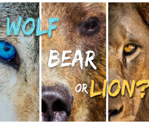 Are you a Wolf, Bear or Lion?