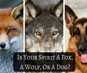 Is your Spirit a Fox, a Wolf or a Dog?
